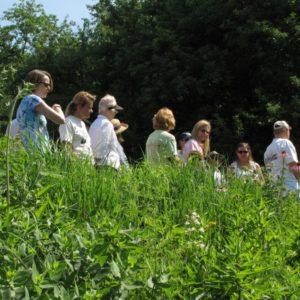 Garden Walk at HMs